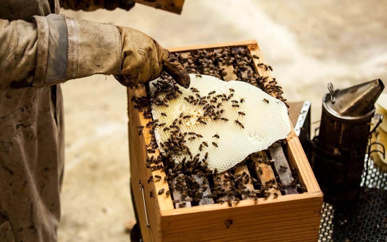 Ruche d'abeilles